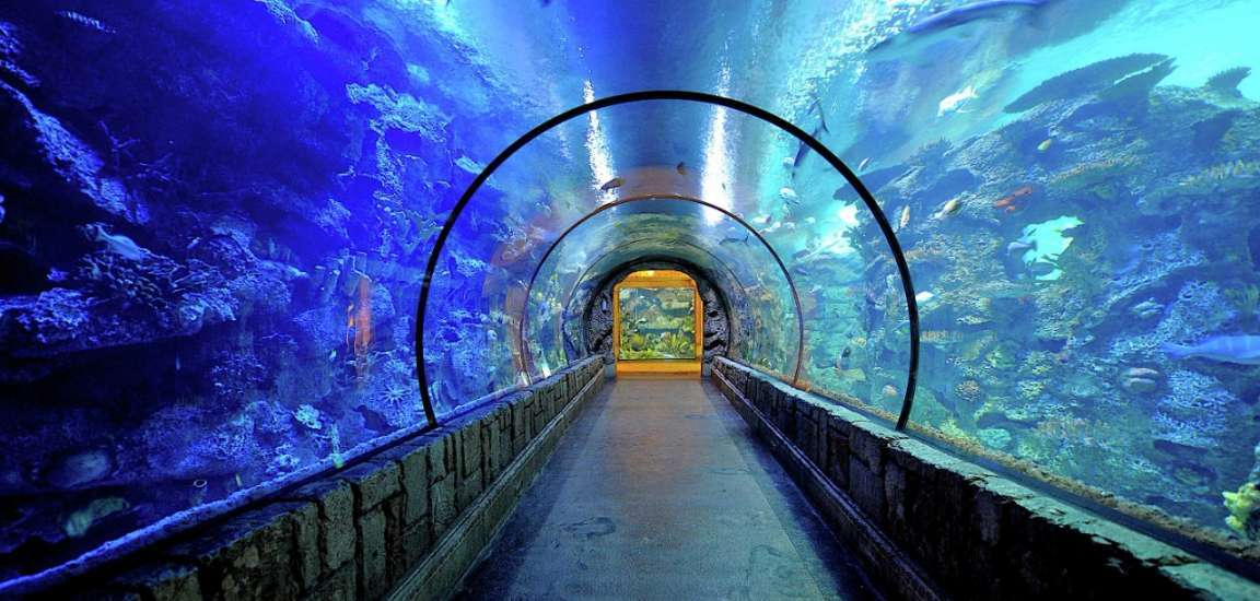 Shark Reef Vegas Attractions Discounts Lasvegasjaunt Com