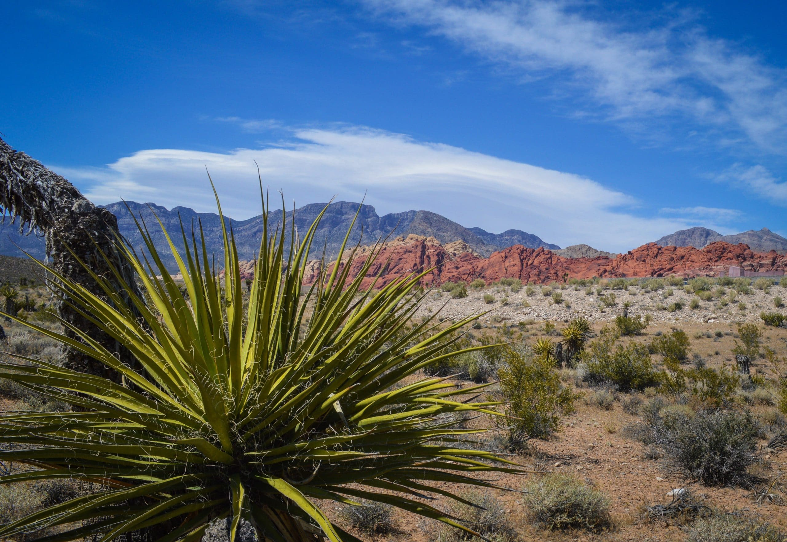 red rock canyon just outside of Las Vegas has a scenic road so you can sightsee from your car