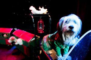 Popovich Comedy Pet Theater Las Vegas