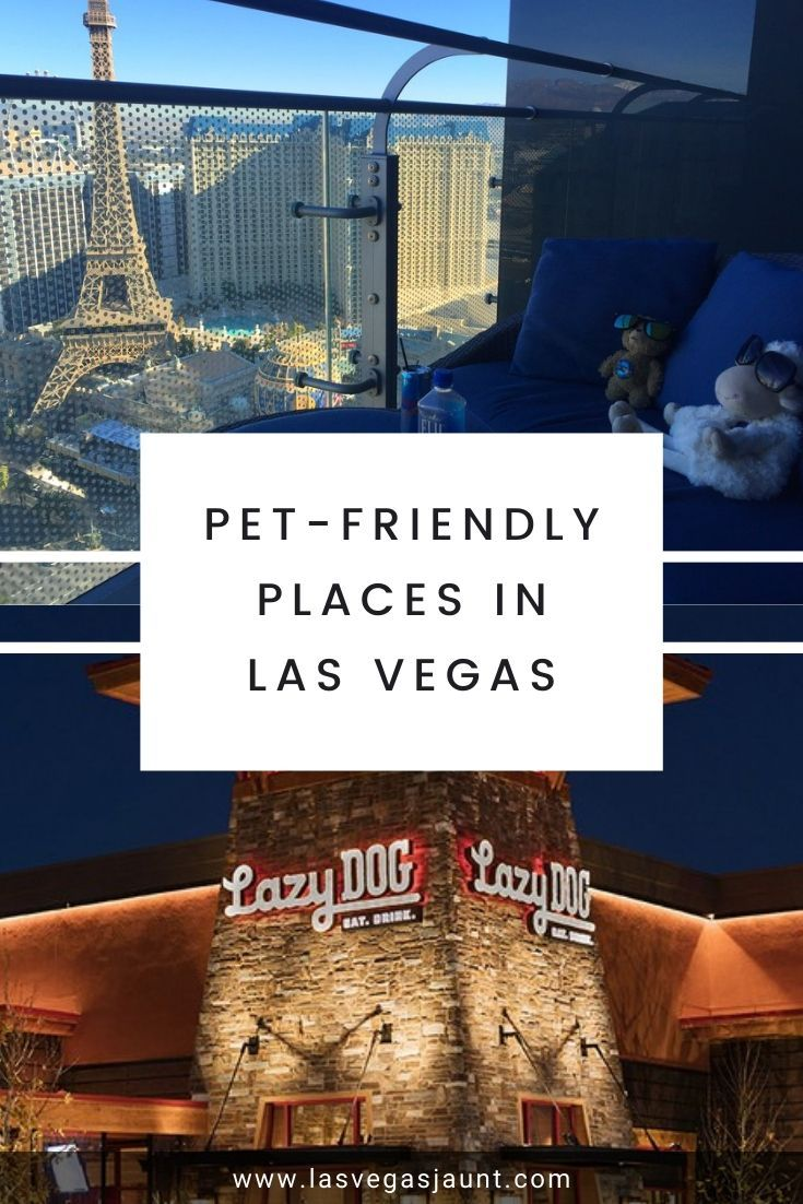 Pet-Friendly Places in Las Vegas