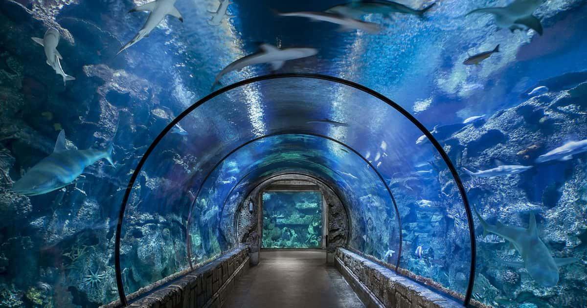 Shark Reef - Vegas Attractions Discounts   www ...