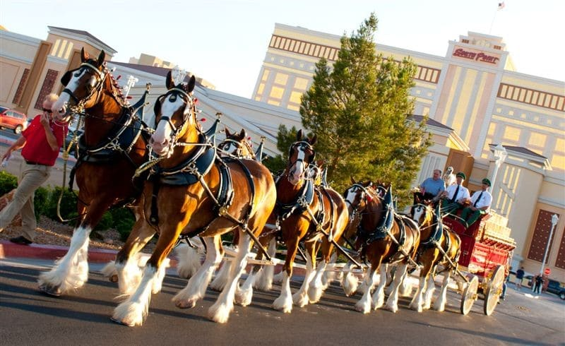 Budweiser Clydesdales South Point Las Vegas